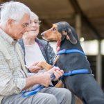 Hundeschule Breloer Cross Dogging (58 von 102)
