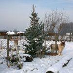 Schnee Huschu 2010 003