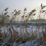Schnee Huschu 2010 084