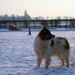 Schnee Huschu 2010 085