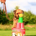 Hundeschule Breloer Cross Dogging (7 von 102)
