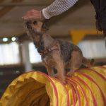 Hundeschule Breloer Cross Dogging (86 von 102)