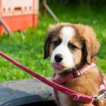 Hundeschule Breloer Welpen (64 von 121)