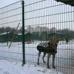 Schnee Huschu 2010 050