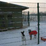 Schnee Huschu 2010 051