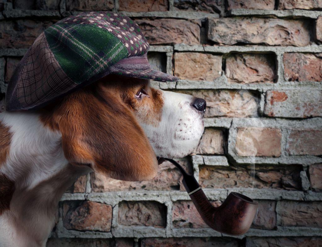 Hund mit Schirmmütze und Pfeife wie ein Detektiv