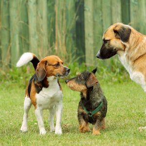 Kommunikation und Ausdrucksverhalten