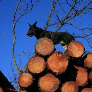 Pepe auf Holz Web-Groesse